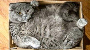 Oto 15 kotów, które nie mogą żyć bez kartonowych pudeł i zawsze się do nich wcisną!