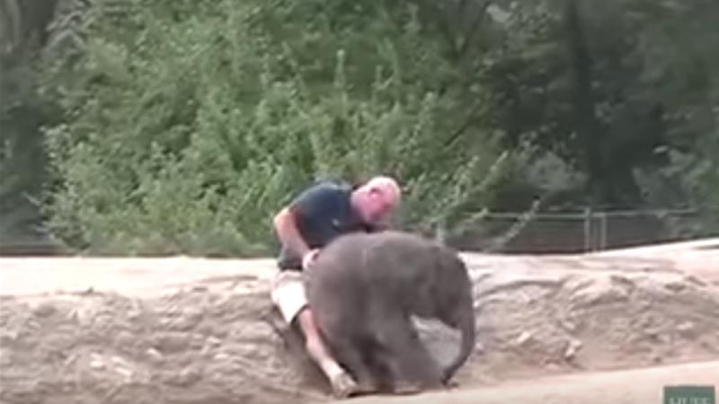 sloniatko