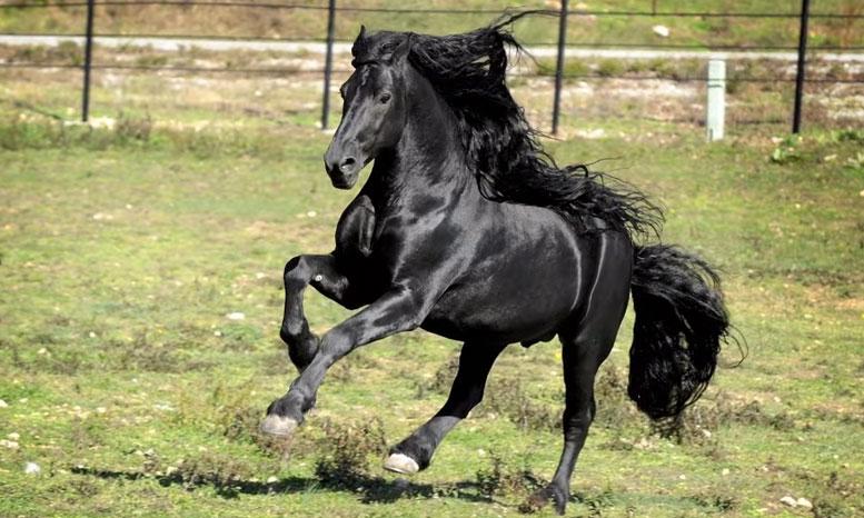koń-1