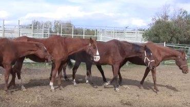 Nigdy nie jest za późno na niesienie pomocy! Poznajcie historię 75 zaniedbanych koni, które dostały drugą szansę
