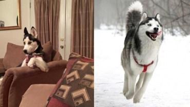 15 złotych zasad, których możesz nauczyć się od husky!