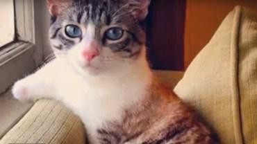 Chociaż ma tylko dwie łapki, jest równie zwinna jak zdrowe koty. Zobaczcie, jak radzi sobie na co dzień!