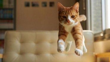 Oto 20 zdjęć zrobionych we właściwym momencie, które dowodzą, że koty są bardzo elastyczne i niezwykle fotogeniczne