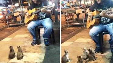 Wszyscy ignorowali tego ulicznego muzyka. Nagle podeszły do niego 4 słodkie kotki i zrobiły TO!