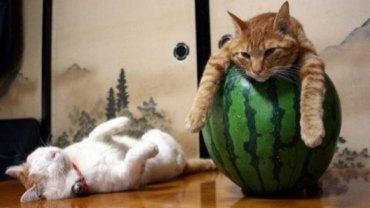 Koty są mistrzami spania w dziwnych miejscach i pokręconych pozycjach. Wystarczy tylko spojrzeć na te zdjęcia
