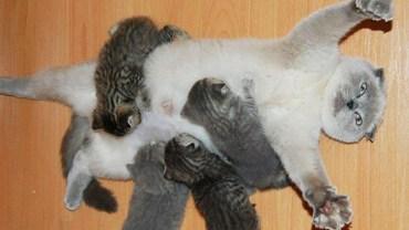 Miny tych zwierząt doskonale obrazują, jak to jest być matką!