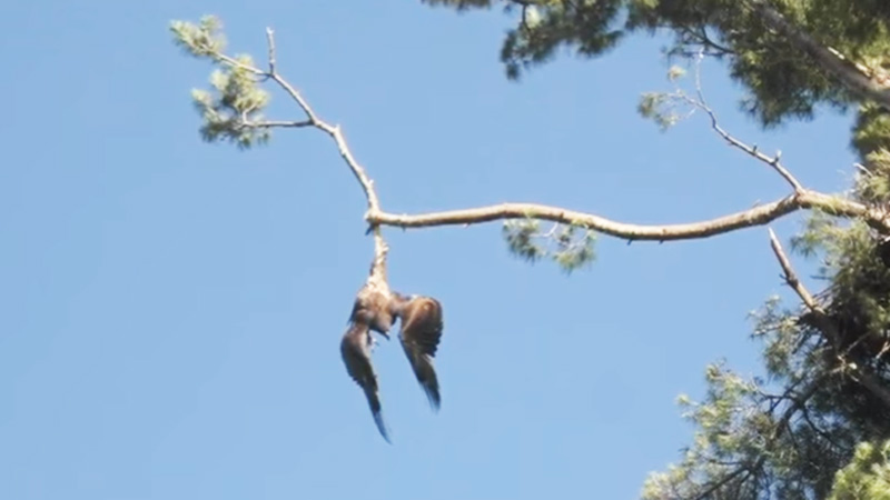 Rescue services refused to help an eagle hanging from a tree.A veteran watching the situation unfold decided to act! 2