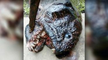 Wędkarze wyciągnęli tę przerażającą kreaturę z rosyjskiej rzeki. Gdy zajrzeli jej do pyska, oniemieli!