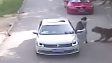 Szok! Tygrys z pekińskiego ZOO pożarł kobietę! Zobaczcie nagranie z kamer monitoringu