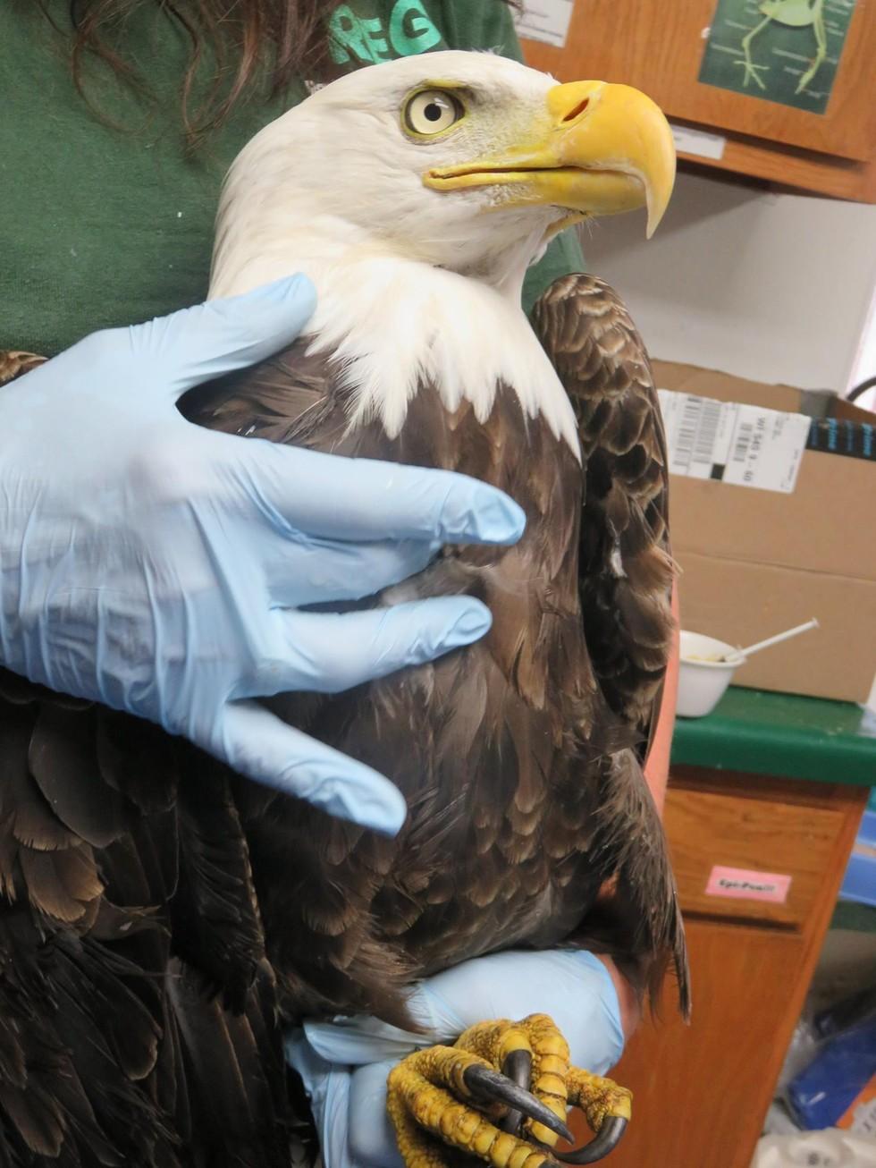 eagle47