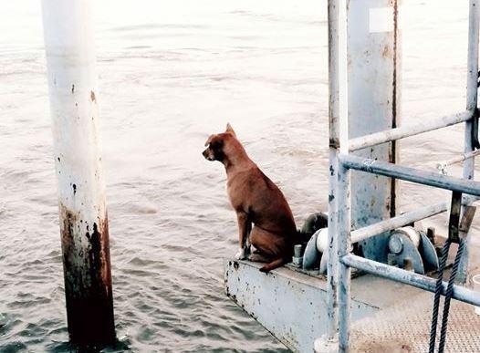 dog-waited-for-family