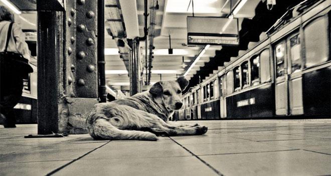 dog-in-new-york-subway-p
