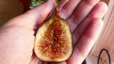 Jeden obrzydliwy fakt o figach, o którym nikt ci nie powie. Ich wnętrze kryje pewną tajemnicę