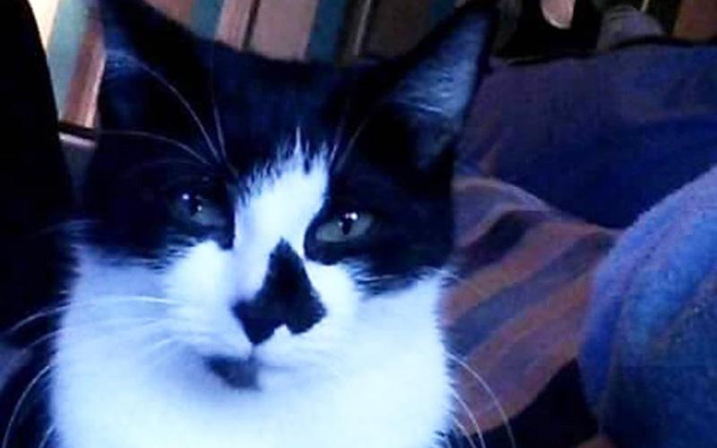 tortured-cat0