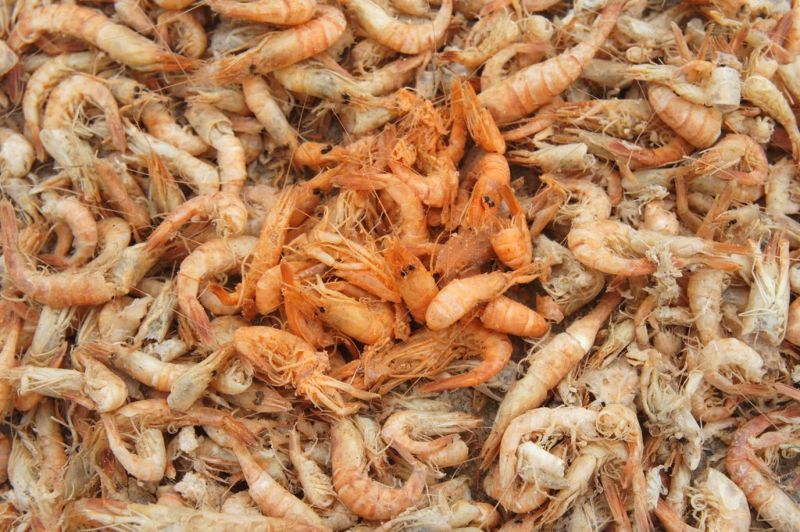 chinese-shrimp-5