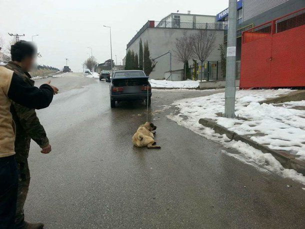 he-dragged-the-dog-by-car