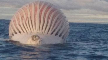 Australijski rybak natrafił na dziwny obiekt unoszący się na wodzie. Prawda na jego temat okazała się zaskakująco prosta
