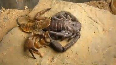 To fascynujące nagranie pokazuje z bliska, jak wygląda zrzucanie skóry (wylinki) przez zwierzęta