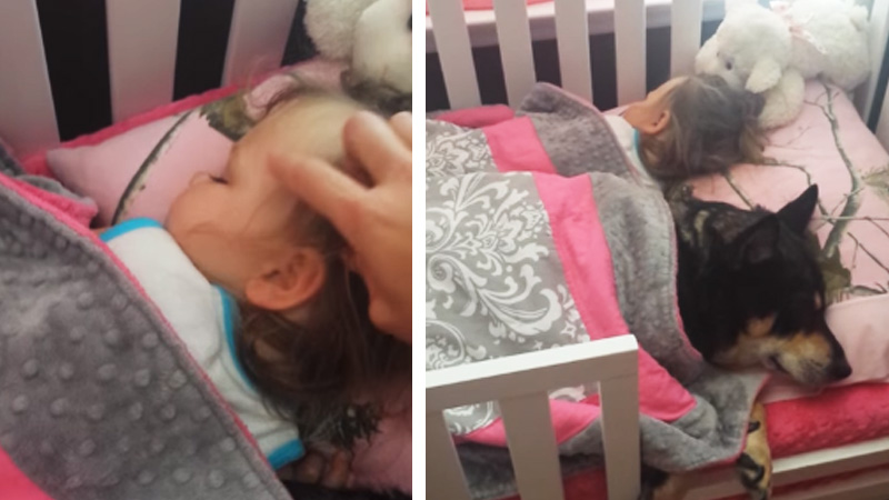 dog-and-baby-sleeps