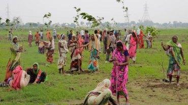 Mieszkańcy Indii w ciągu 24 godzin posadzili prawie 50 milionów drzew! Wspomogli tym ratowanie klimatu i pobili rekord Guinnessa