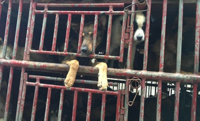 saved-from-the-slaughterhouse-dogs-10