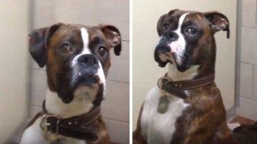 Ten obrażony na swojego właściciela pies rozbawił już prawie 2 miliony internautów. Jego mina rozwali i Ciebie