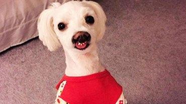 Alison tylko chwilowo miała zająć się psem, który czekał na adopcję, ale gdy zobaczyła czworonoga, to od razu wiedziała, że chce go zatrzymać