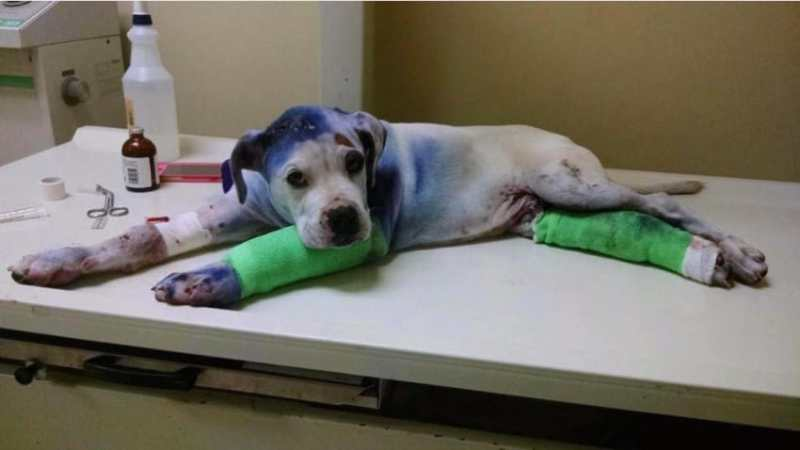 They brought a badly wounded pup to the clinic. What happened to him there will bring tears to your eyes. 3