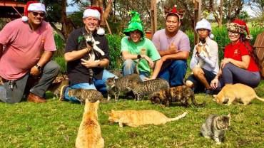 Spełnili swoje marzenie i stworzyli wspaniałe sanktuarium dla kotów i ludzi