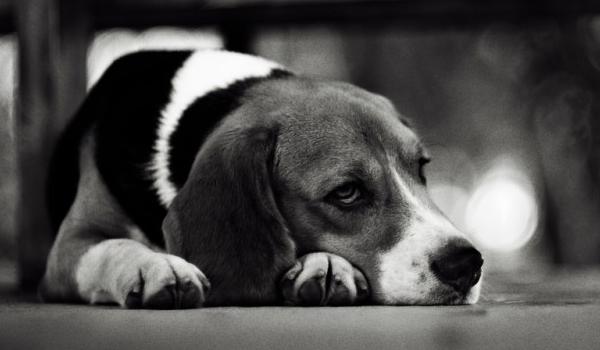 Nikt nie chciał się bawić z tym smutnym chorym psem. Któregoś dnia pojawił się ktoś, kto odmienił jego życie