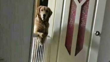 Mężczyzna poznał bolesny powód, dla którego jego pies co noc patrzy na niego, dopóki nie zaśnie!