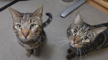 Brytyjskie małżeństwo dostało po śmierci ukochanego kota list, który ujawnił prawdę, jakimi ścieżkami chadzał ich pupil