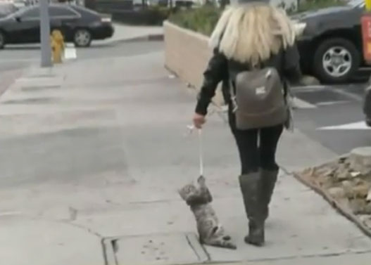 A woman in the streets of Los Angeles pulled a cat by a string! The injured animal was saved by passers by, and his aggressive owner fled and is on the run 3