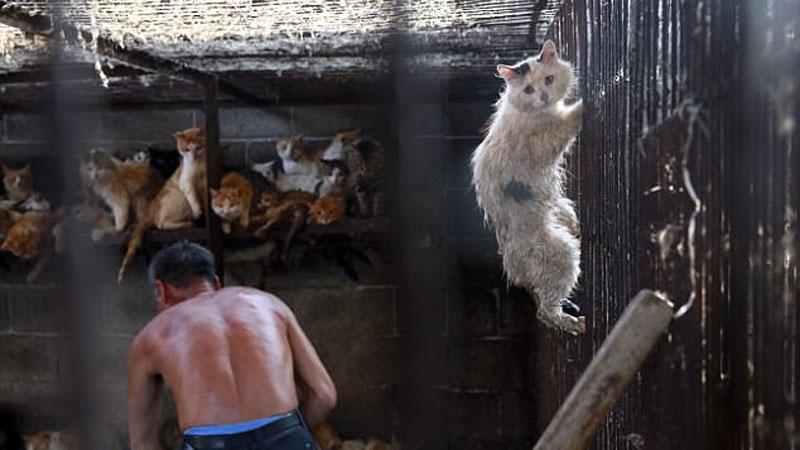 Koniec z jedzeniem psów na chińskim festiwalu Yulin! Z okazji tego święta smakoszy mięsa naszych pupili, co roku ginęło około 20 tysięcy czworonogów!