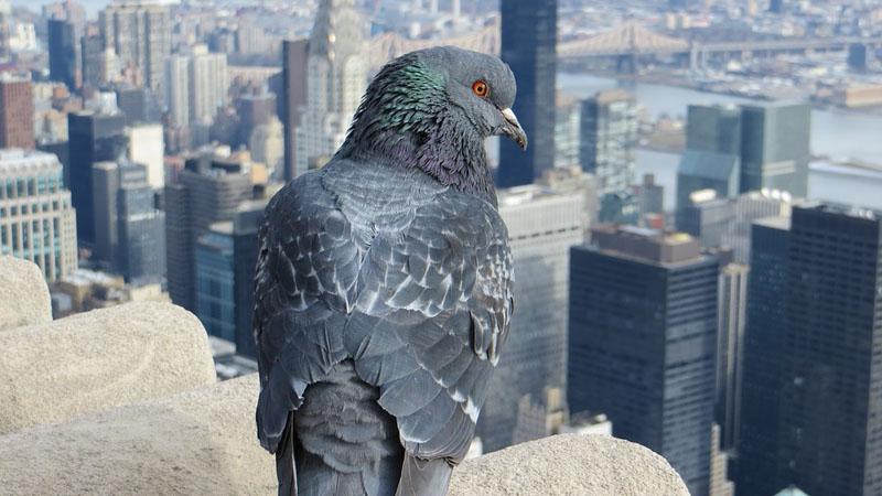 Widok gołębia z plecakiem zdziwił wszystkich, a jego zawartość sprawiła, że osłupieli
