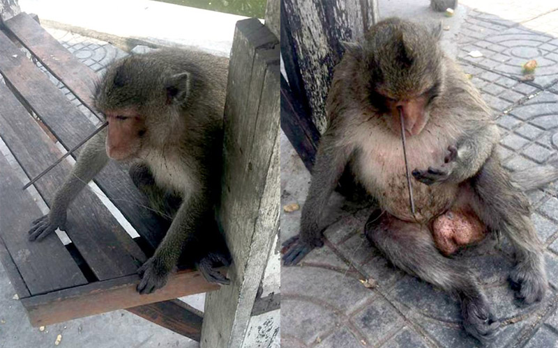 She was sitting on the side of the road and did not understand what had happened. Only quick help made the monkey miracle survive! 5