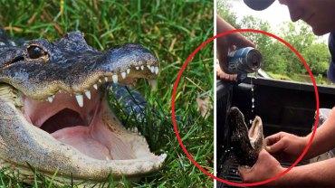 Na siłę wlali małemu aligatorowi do gardła alkohol! Swoim głupim czynem pochwalili się na portalu Snapchat