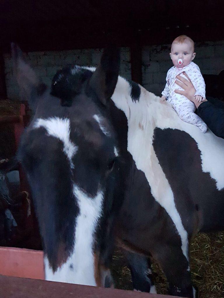 W stadninie znajomego matka tylko na chwilę spuściła z oka swoją córeczkę. Kiedy spojrzała później, koń robił to...
