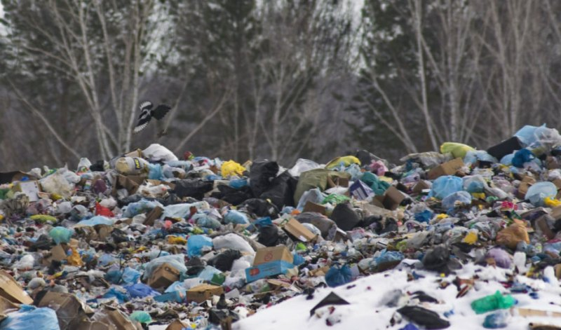 This bear photo of a smoky landfill expresses more than a thousand words. When will humanity finally understand that it will turn the planet into ruin? 3