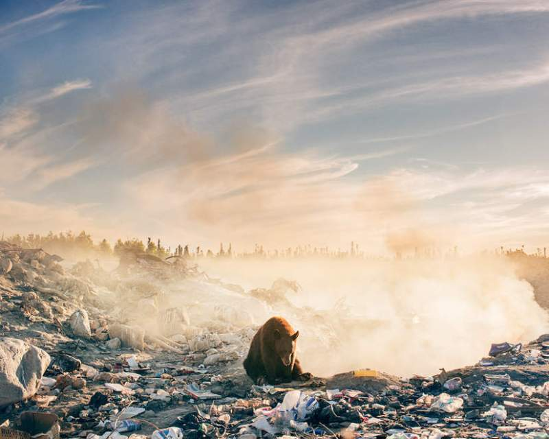 This bear photo of a smoky landfill expresses more than a thousand words. When will humanity finally understand that it will turn the planet into ruin? 4