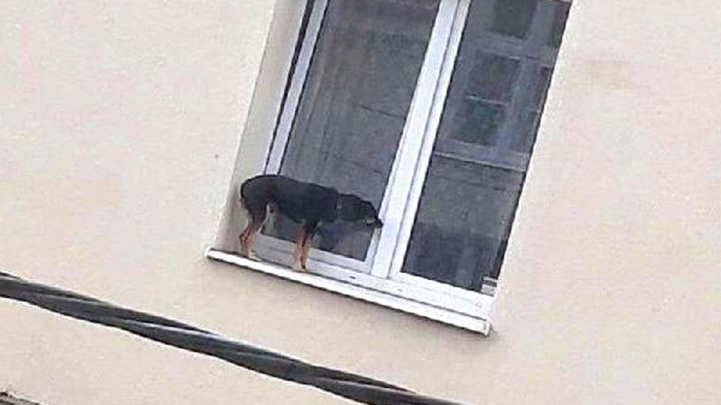Wystawili psa na parapet, bo nie chciało się im wyprowadzać go na spacer! To smutne zdjęcie doprowadziło internautów do wściekłości