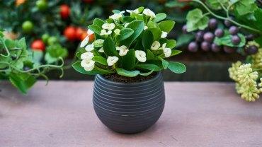 Babcine porady, dzięki którym wasze kwiatki będą zdrowe, bujne i nabiorą nowego blasku