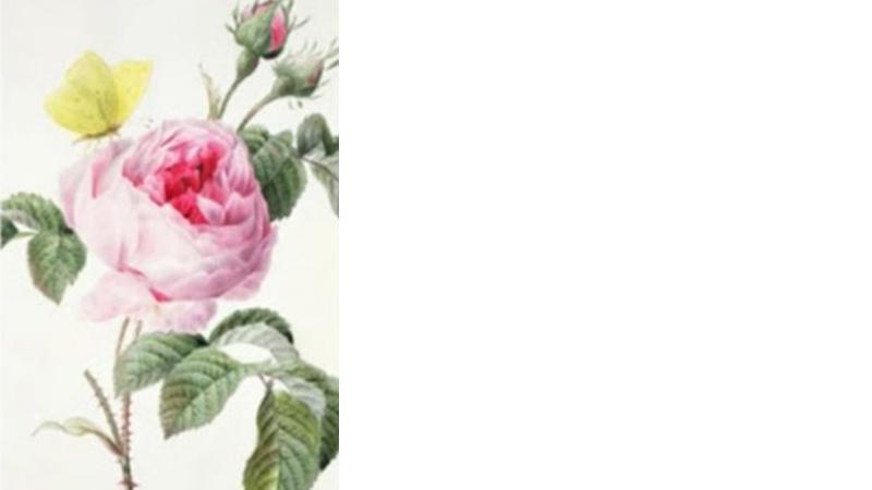 Wybierz różę, która najbardziej ci się podoba i dowiedz się o sobie czegoś ciekawego