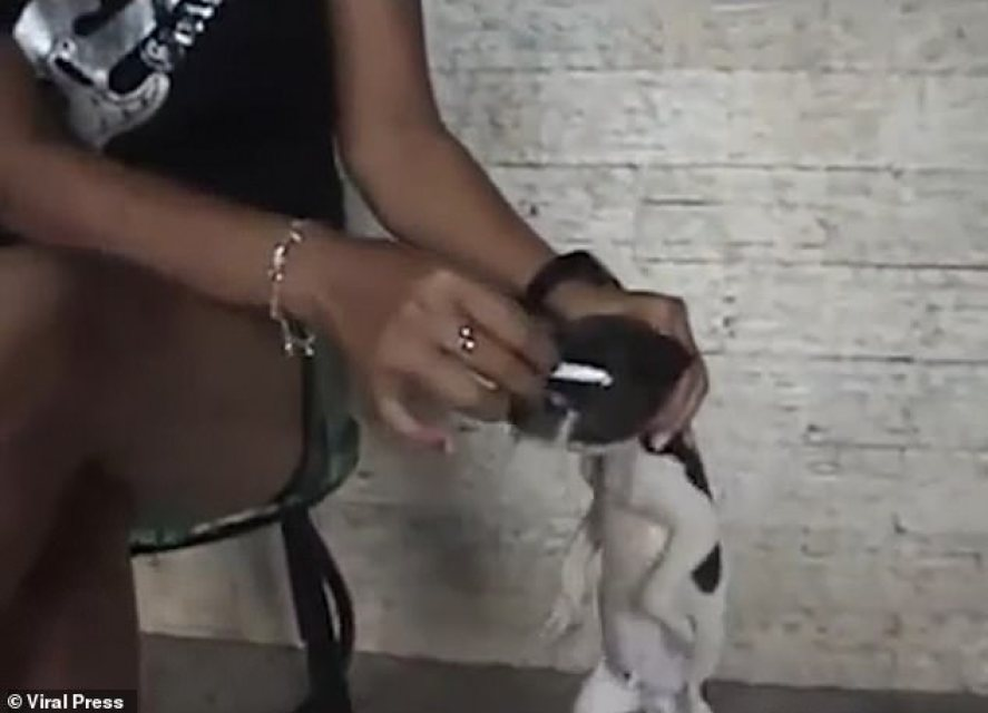 Zgasiła papierosa w oku szczeniaka! Internauci pragną wymierzyć jej sprawiedliwość
