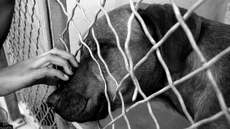 """Wynieśli się z domu, ale """"zapomnieli"""" zabrać psa. Zostawili go w klatce, bez jedzenia, wody i szans na przeżycie"""