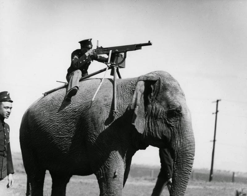 Żywe bomby w postaci psów, delfiny kamikadze, pasy szahida na krowach - zwierzęta są marionetkami w naszych wojnach!