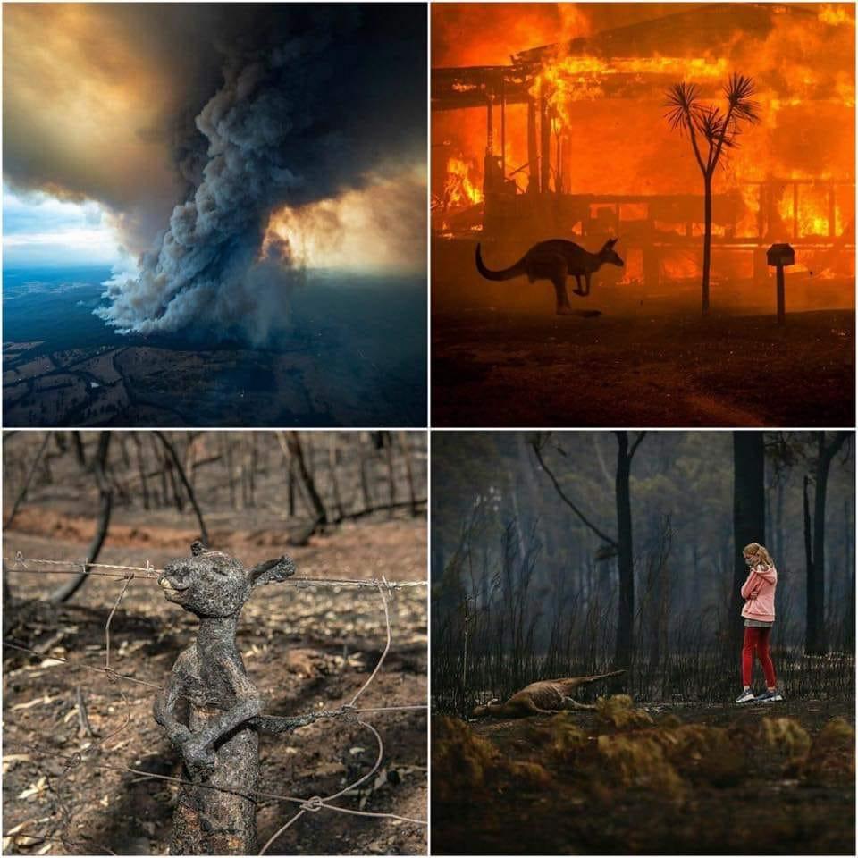 Armagedon w Australii! Zginęło już 500 milionów zwierząt, a będzie jeszcze gorzej. Czy spłonie cały kontynent?