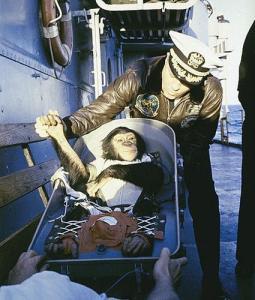 Ham, le premier chimpanzé dans l'espace.