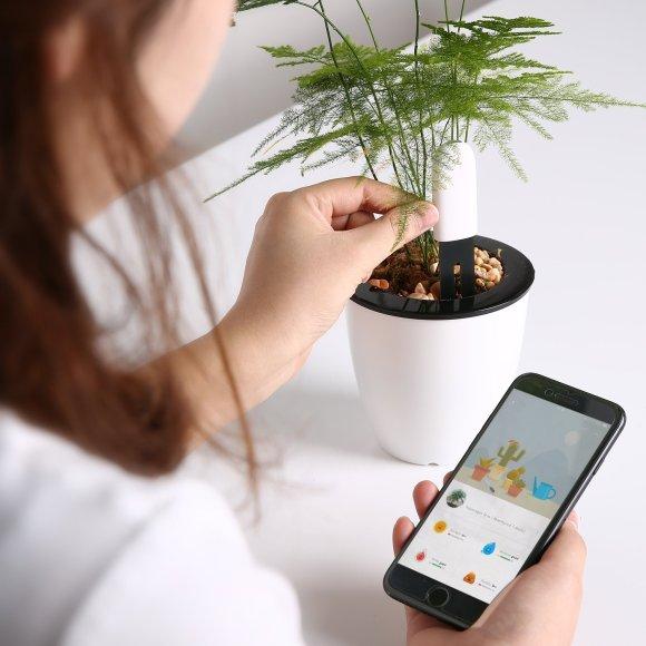 L'application Flower Care de suivi des données est intuitive et pratique.