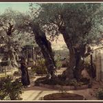Monk in Gethsemane, Jerusalem
